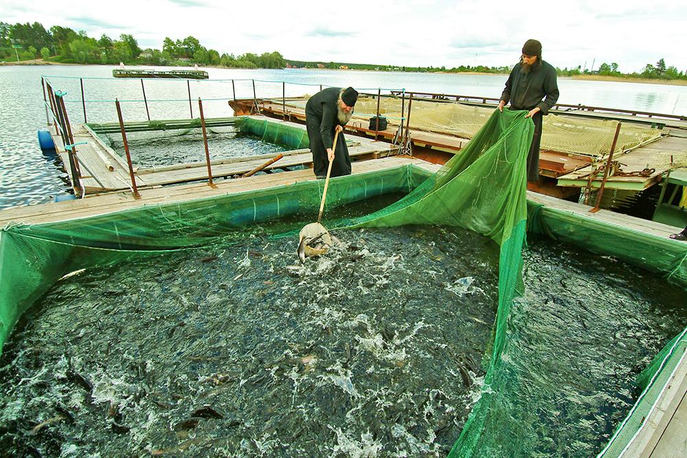 Послушание на рыбной ферме